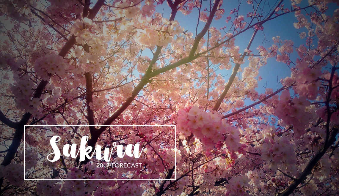 Sakura forecast 2017
